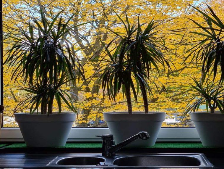 tanaman dan jendela
