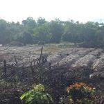 pemanfaatan lahan peti