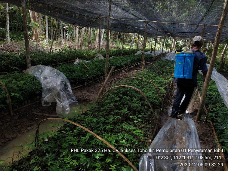 Persiapan bibit Agroforestry