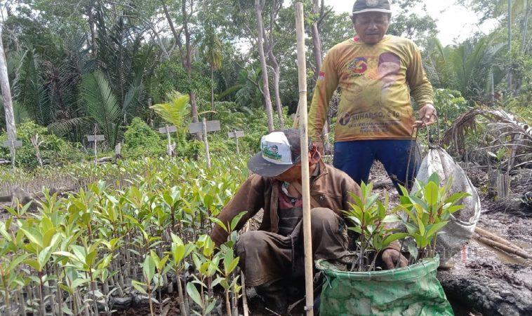 Geliat Mangrove di Desa Kubu.1