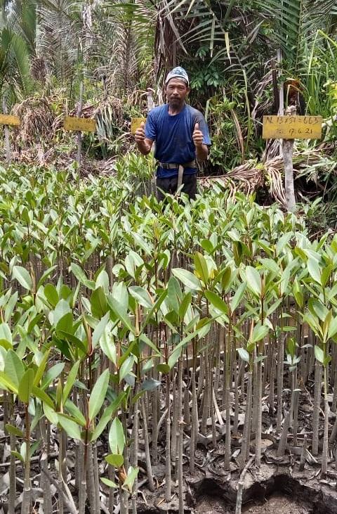 Geliat Mangrove di Desa Kubu.2
